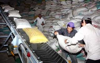 Xuất khẩu gạo khởi sắc, lợi hay hại?