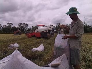 Doanh nghiệp gạo được ký hợp đồng thương mại ở thị trường tập trung